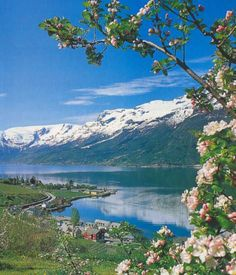 norwegia is where its at;) Here ya go Lexy! Norway, Beautiful Places, Places To Visit, To Go, Lol, Mountains, Flowers, Travel, Viajes