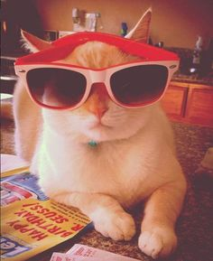 What time is it? Time to chill. One cool cat.