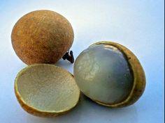 Longan, é também conhecida como Olho do Dragão, essa fruta asiática é semelhante à lichia. Mas menor.