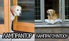 Φωτογραφία του Frixos ToAtomo. Funny Shit, Funny Cat Memes, Funny Cats, Funny Animals, Greek Memes, Funny Greek Quotes, Sarcastic Quotes, Can't Stop Laughing, Have A Laugh