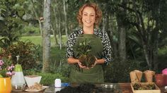 A nossa jardineira Carol Costa te ensina. Confira no vídeo!