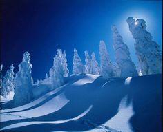 Ice monsters, Mt. Moriyoshi, Akita prefecture