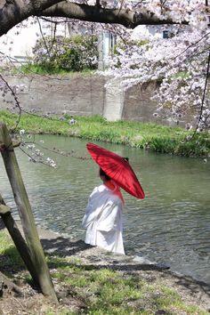Omihachiman Sakura by Randi Jensen on 500px