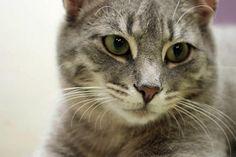 Wirbelwind Riley (geb. Herbst 2012) sucht ein Zuhause zum schmusen und toben