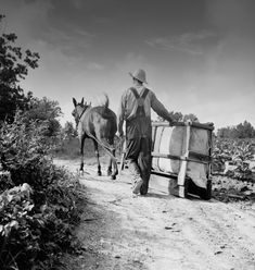 During the first week of July, Dorothea Lange took photos of sharecropper farmers in Granville County, North Carolina. Great Depression Years, Dorothea Lange Photography, Appalachian People, Migrant Worker, Dust Bowl, Documentary Photographers, Vintage Photography, Painting Inspiration, American History