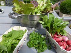 Gemüse aus dem #Balkongarten und Hochbeet: Knackig, frisch, homegrown auf engstem Raum...