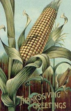 Corn Vintage Thanksgiving Postcard