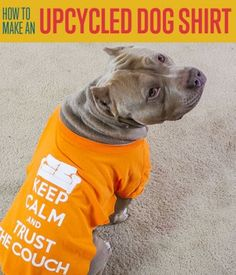 How To Make a DIY Dog Shirt | DIY Pet Projects