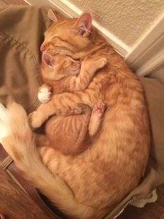 A mother's love in one picture. cats #cat