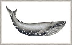 Whale Display I Framed Painting Print