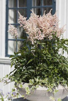 Astilbe, Garden Inspiration, Flora, Seeds, Plants, Outdoor, Gardening, Gardens, Patio