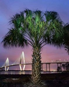 Charleston, SC, photo by Bernie Brawley