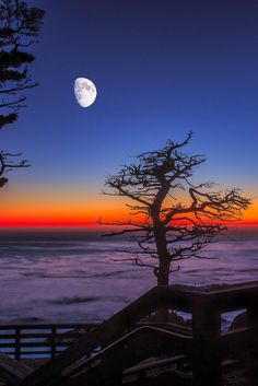 Beautiful Nature — Lone Cypress by Hilton Chen Beautiful Moon, Beautiful World, Beautiful Places, Pretty Pictures, Cool Photos, Shoot The Moon, Nature Scenes, Nature Pictures, Night Skies
