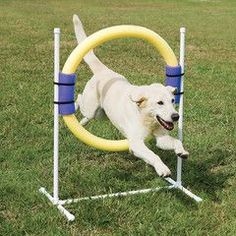 Agility Dog Jump - PetSafe Ring Jump for Dogs