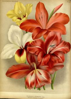 The Biodiversity Heritage Library works collaboratively to make biodiversity literature openly available to the world as part of a global biodiversity community. Illustration Botanique, Botanical Illustration, Impressions Botaniques, Seed Art, Botanical Prints, Pansies, Iris, Gallery, Floral
