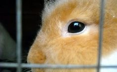 Is This an End to Horrible Experiments on Animals' Eyes?