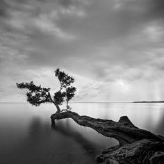 Árvore na água Impressão artística