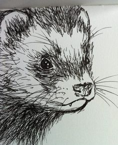 Another coal drawing. Ferrets are concentrated cuteness and if I wouldn't highly doubt I could invest enough time to take care of one I'd get one (and its name would be Ashmodai or Asmodeus). Pencil Art Drawings, Art Drawings Sketches, Cute Drawings, Animal Sketches, Animal Drawings, Exotic Pets, Art Sketchbook, Cute Art, Art Inspo