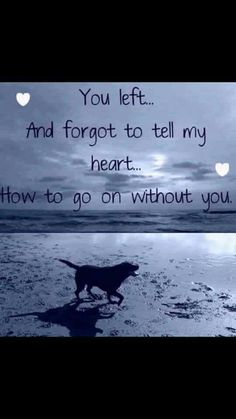 Remember your furry friend with a this memory box https://www.etsy.com/listing/273653116/pet-memory-box-customizable?ref=listing-shop-header-3