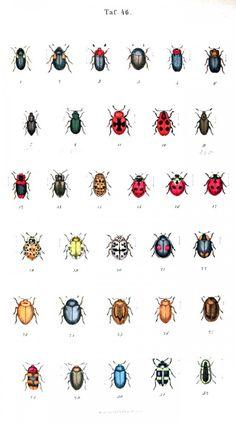 al sort of vintage printables; like these Animal - Insect - Ladybug - Educational plate