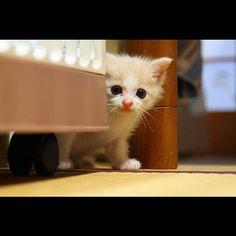 #cutest #cat #ever #NOTMYPIC  - @girls_zone- #webstagram