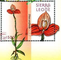 orchid stamp--Sierra Leone