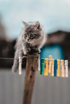 llbwwb:   Todays Cuteness :) (via 500px / Untitled by Alexey Drangovskiy)