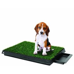 PetZoom Pet Park Deluxe 3-piece Dog Relief System - Free Shipping On Orders Over $45 - Overstock.com - 17276323