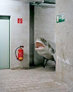Un tiburón en el pasillo (K. Pichler)