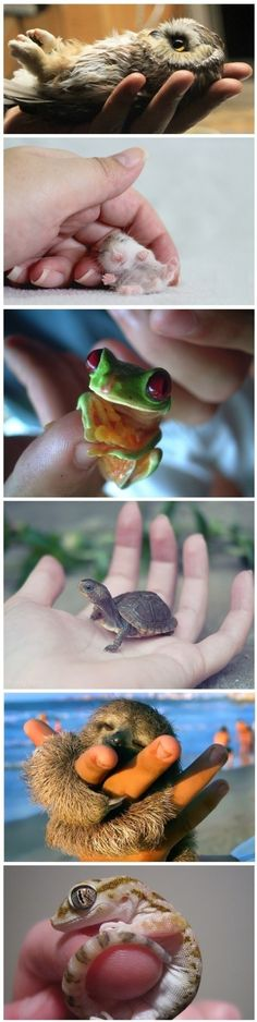 Funny pictures of the day (52 pics) Tiny Baby Animals (compilation)