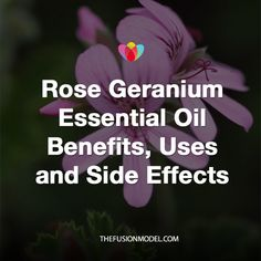 Rose Geranium Essential Oil Benefits, Uses and Side Effects