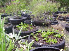garden using old tires