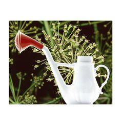 #wateringkettlecan#2011#antonioarico#madeinitaly#milan#calabria#selettiworld