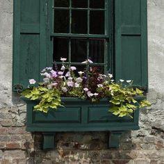 Hunter green shutters and window box.