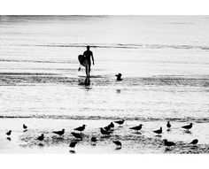 The surfer and the seagulls