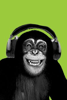 Chimpanzee-Headphones Pôsters na AllPosters.com.br