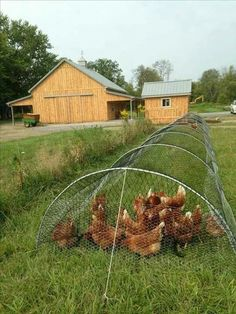 This looks like a good way to use chickens in the garden.