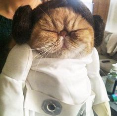 Princess Leia Cat ❤️