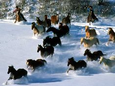THIS is Colorado!! and why I want to live there. REAL cowboys... well not really for me.. but for me to BE one!! :)