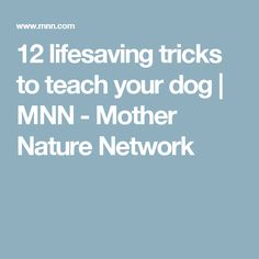 12 lifesaving tricks to teach your dog | MNN - Mother Nature Network