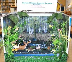 ideas for wetlands diorama! they did an aweome job! Ecosystems Projects, Science Projects, School Projects, Projects For Kids, Project Ideas, School Ideas, Craft Ideas, Rainforest Habitat, Animal Habitats