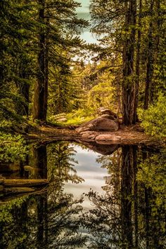 Two Trees at the Mosquito Pond Photo by Janis Knight / Home Planet Images -- National Geographic Your Shot