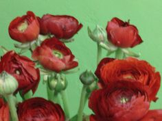 Ranunculus Available at Greenleaf Wholesale Florist  Phoenix (602) 264-3781 www.greenleafwholesale.com