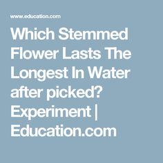 Which Stemmed Flower Lasts The Longest In Water after picked? Experiment | Education.com