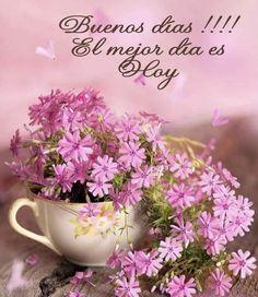 Plants, Get Well Soon, Bom Dia, Plant, Planets