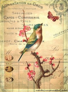 Free Bird Picture with Blossoms - graphics fairy has beautiful images FREE Decoupage Vintage, Decoupage Paper, Vintage Diy, Vintage Ephemera, Vintage Cards, Vintage Paper, Vintage Postcards, Images Vintage, Vintage Pictures