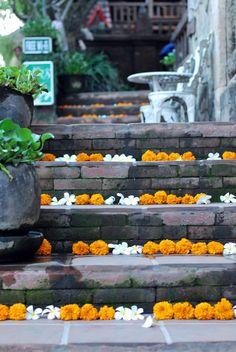 cafe marigolds and frangipani