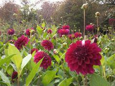 35 View Photos, Plants, Beautiful Gardens, Plant, Planets