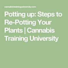 Potting up: Steps to Re-Potting Your Plants | Cannabis Training University