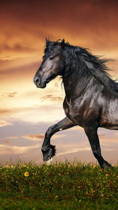 the iOS app for more. background iphone x xs xr 8 7 6 max live wallpapers backgrounds ios Most Beautiful Animals, Beautiful Horses, Animals Images, Cute Animals, Horse Senior Pictures, Photo Animaliere, Horse Wallpaper, Black Stallion, Running Horses